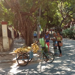 Banana cart down the street from our apartment