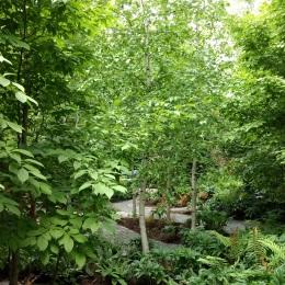 The nuseum's garden