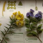 Specific species of flowers...all in glass